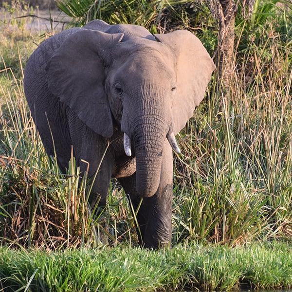 elephant near watering hole