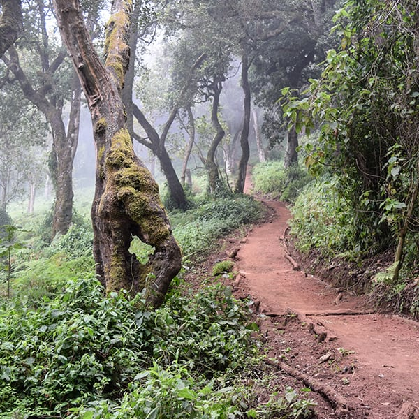 rainforest kilimanjaro