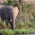 elephant near water