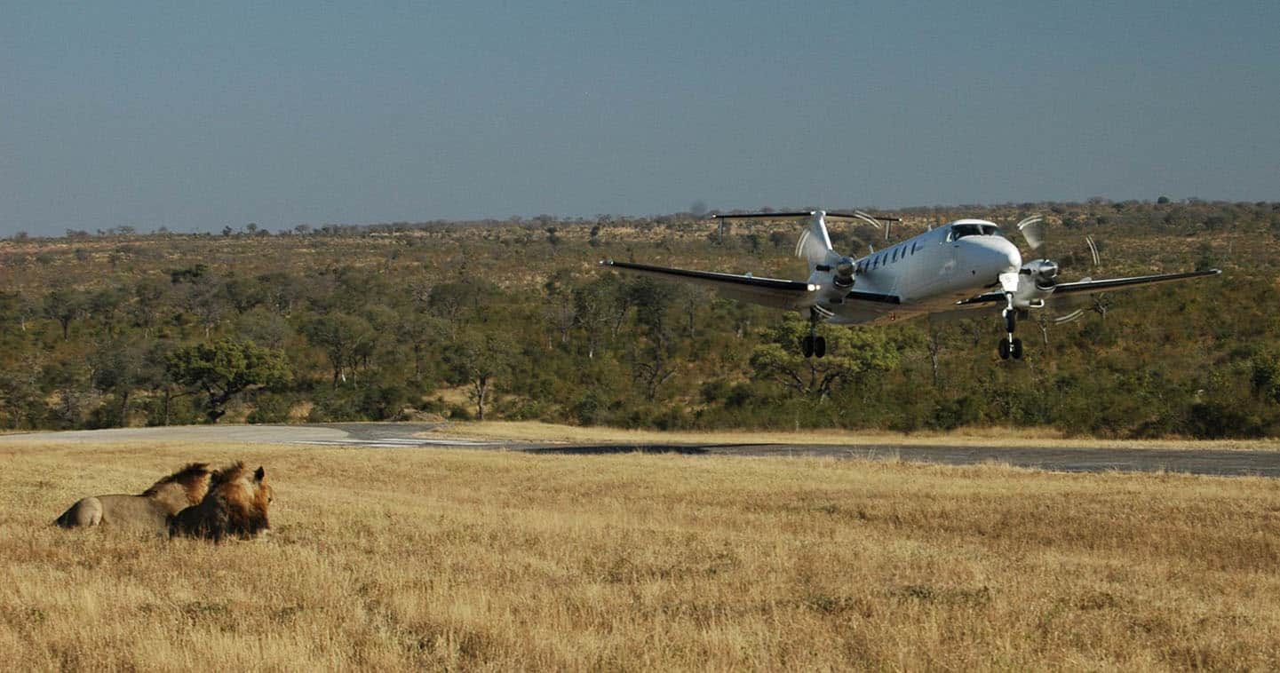 fly to serengeti