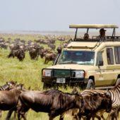 tanzanian safari
