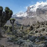 Climb Kilimanjaro on the Lemosho Route