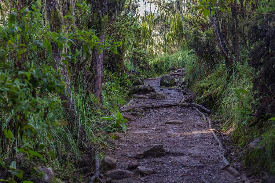 machame rainforest