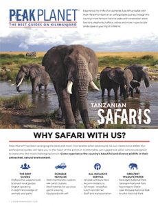 safari brochure