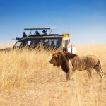 Things I wish I knew before doing a safari