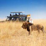 Things I wish I knew before doing a safari