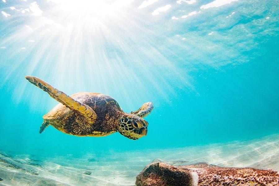 sea turtle zanzibar